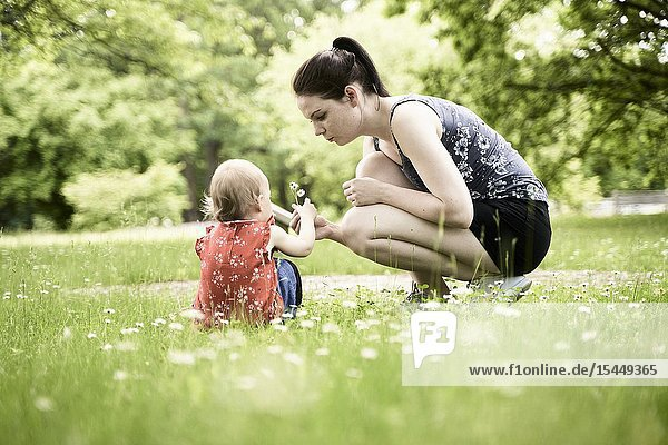 Young patient mother showing daughter baby toddler daisy flowers on meadow