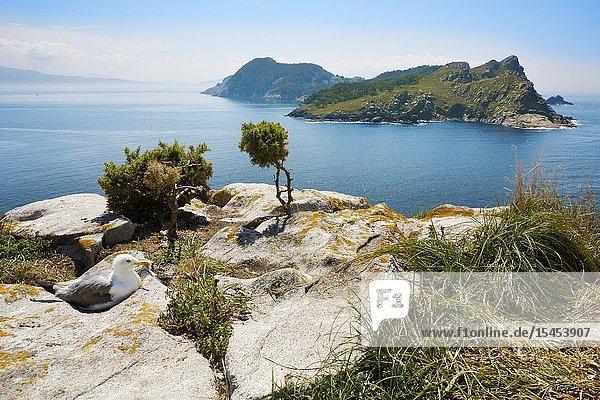 View of San Martiño Island from O Faro Island. Cies Islands. Atlantic Islands of Galicia National Park. Vigo estuary. Rias Baixas. Pontevedra province. Galicia. Spain.
