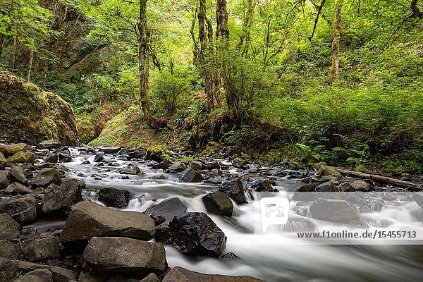 Bridal Veil trail  stream and waterfall is one of the most visited sites in the Columbia River Gorge.