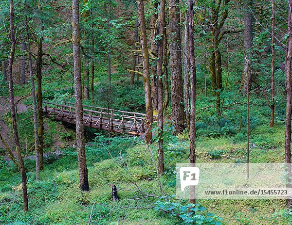 The Wyeth Trail in the Columbia River Gorge has a wooden foot bridge to enable hikers to cross Gorton Creek.