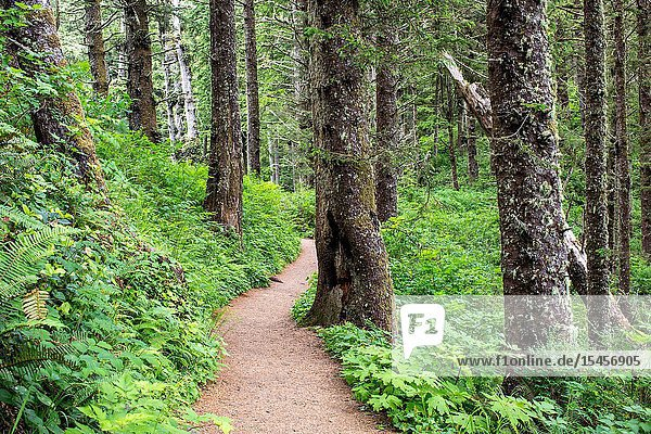 The Cape Lookout Trail aloing the Oregon coast winds its way through a dense forest that stretches for miles.