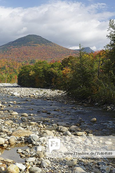 Autumn foliage on Big Coolidge Mountain from along the East Branch of the Pemigewasset River in Lincoln  New Hampshire on a cloudy autumn day. This mountain was logged during the East Branch & Lincoln Railroad era (1893-1948).