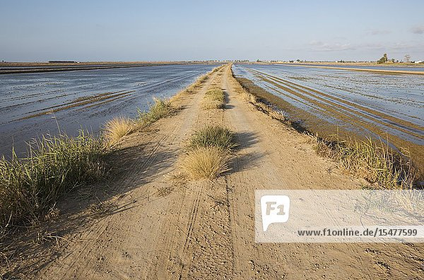 Country lane amidst flooded rice fields. Environs of the Ebro Delta Nature Reserve  Tarragona province  Catalonia  Spain.