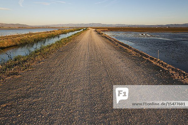 Country lane and canal amidst flooded rice fields. Environs of the Ebro Delta Nature Reserve,  Tarragona province,  Catalonia,  Spain.