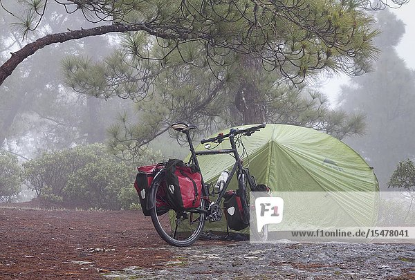 Touring cyclist camping in pine forest in Tamadaba natural park on Gran Canaria  Canary Islands  Spain.