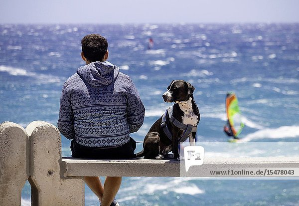 Rear view of man with dog watching windsurfers at Pozo Izquierdo  Gran Canaria  Canary Islands  Spain.