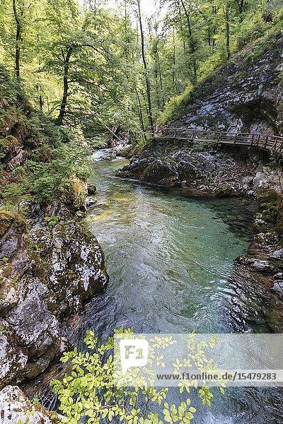 Vintgar Gorge  between Bled Lake and Bohinj Lake in Slovenia  Europe.