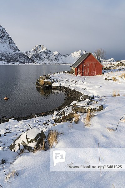Red cabin in the snow with mountains in the background. Vestpollen  Leknes  Nordland county  Northern Norway  Norway.