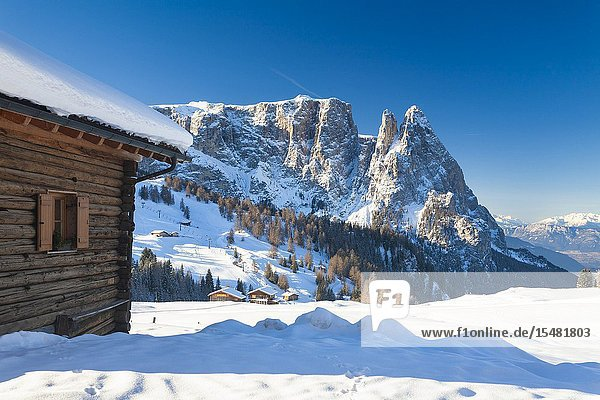 Wood hut in the snow with Sciliar and Santner peaks in background  Alpe di Siusi / Seiser Alm  Dolomites  South Tyrol  Italy.