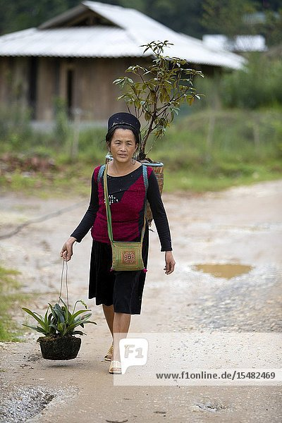 Woman from The Black Hmong Hill Tribe in Sa Pa  Lao Cai Province  Vietnam.