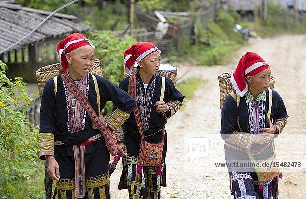 Women of the Red Dao ethnic minority  Ta Phin Village  Sa Pa  Lao Cai Province  Vietnam  Asia.
