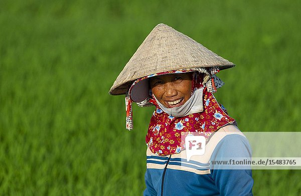 Woman working in a rice field  Hoi An  Quang Nam Province  Vietnam  Asia.
