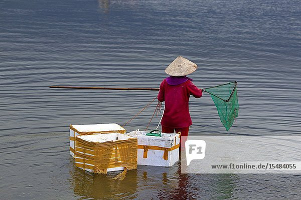 Woman fishing oysters in the lagoon  Lang Co  Thua Thien-Hue Province  Vietnam  Asia.