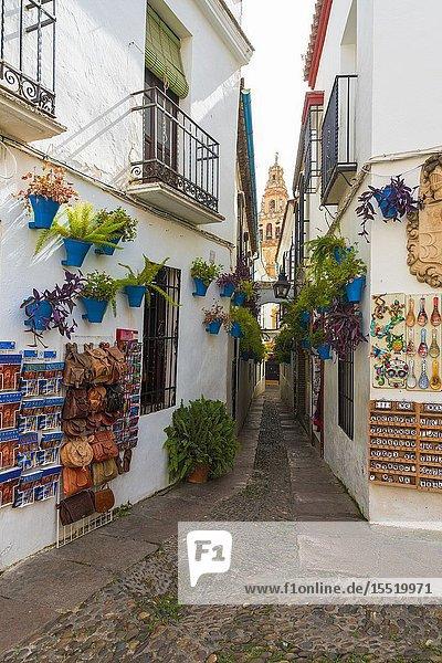 Calleja De Las Flores  famous flower pot lined street in the historic centre  Cordoba  Andalusia  Spain.
