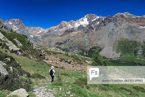 Hiker on the trail toward Alpe Zana in front of Mount Disgrazia  Valmalenco  Province of Sondrio  Lombardy  Italy  Europe.