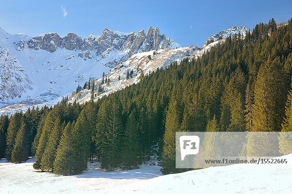 Coniferous forest in Les Contamines valley. French Alps