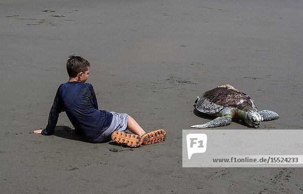 Kid sits next to dead hawksbill sea turtle (Eretmochelys imbricata) killed by boat propeller in Ladrilleros  Pacific Coast of Colombia.