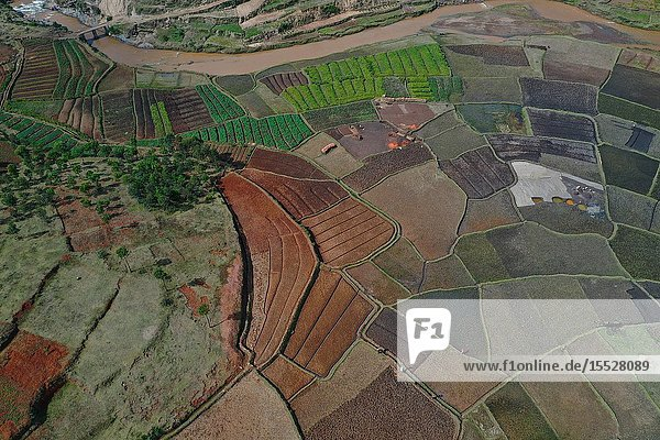 Vegetable cultivation and brick making on the rice fields  National Route RN7 between Antsirabe and Antananarivo  Madagascar.