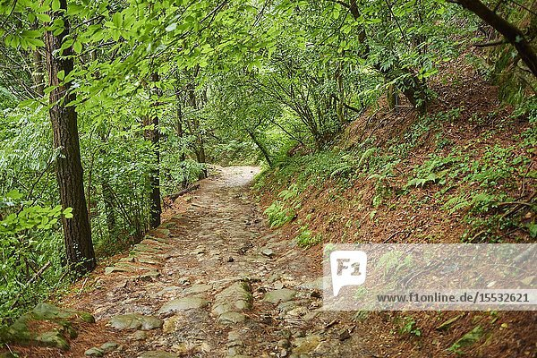 Walking path going through the forest from Donostia San Sebastian to Orio at the Camino del Norte  coastal path  Way of St. James  Camino de Santiago trail  Basque country  Spain  Europe