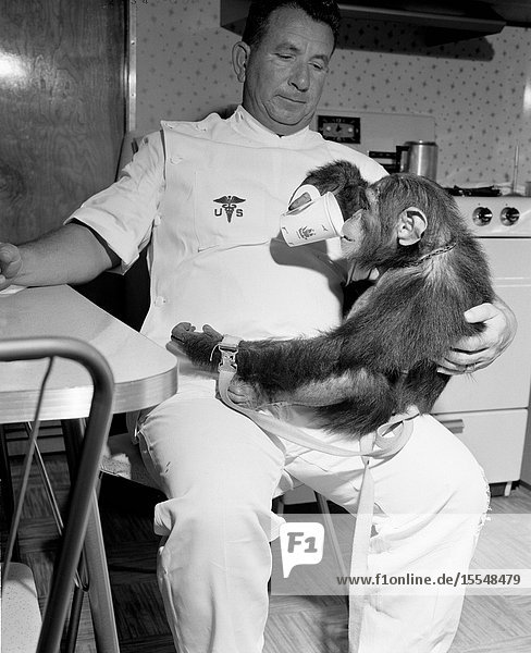 Chimpanzee Enos pictured with his handler. He is using a cup to drink from while the handler sits at a kitchen table.