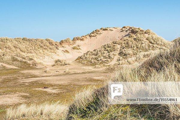 Sand dunes where Norfolk Coast path National Trail from Barnham Overy Staithe reaches the sea  East Anglia  England  UK.