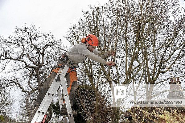 Micheldever  Winchester  Hampshire  England  UK. March 2019. Tree surgeon trimming a tree from a ladder.