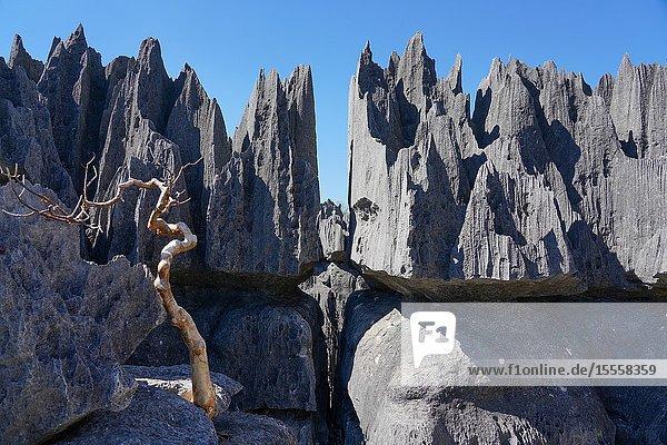 Tsingy de Bemaraha National Park  Melaky Region  Western Madagascar.