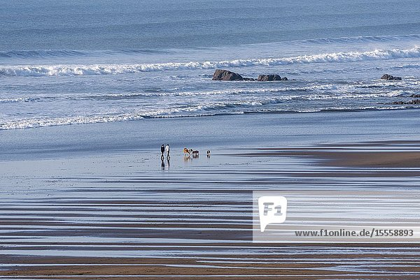 Widemouth Bay,  Cornwall,  England,  UK. February 2019. Widemouth Bay,  close to Bude,  north Cornwall with a backdrop of the sea at low tide.