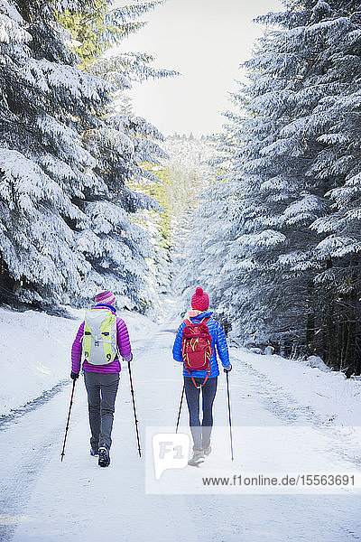 Women hiking in snowy woods
