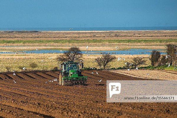 Tractors carrying out deep bed shaping followed by sowing the fields in early springs time at Burnham Overy in North Norfolk  East Anglia  England  UK.