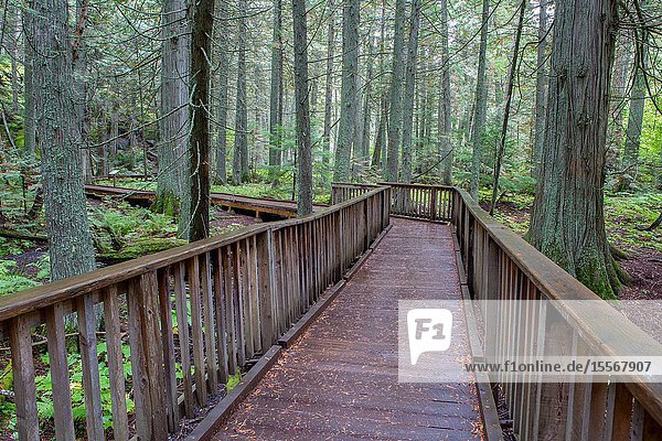 Visitors can enjoy visiting an Old Growth Cedar Forest in Glacier National Park  in Montana.