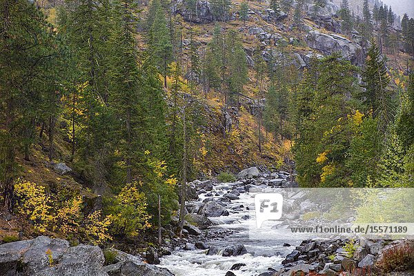 A mountain stream in Central Washington  in the Pacific Northwest  weathers boulder sized rocks and flows as white water rapids.