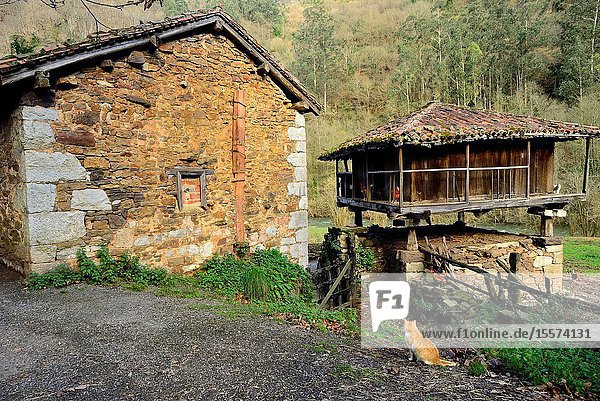 Traditional Asturian granary. Green Path of Trubia river or Bear's Path  between Tuñon and San Andres  Asturias  Spain.