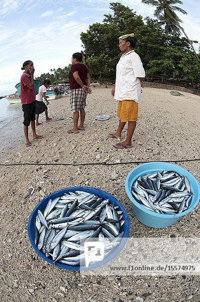 Morning catch of fish in bowls with women market sellers looking on  Ambon  Indonesia.