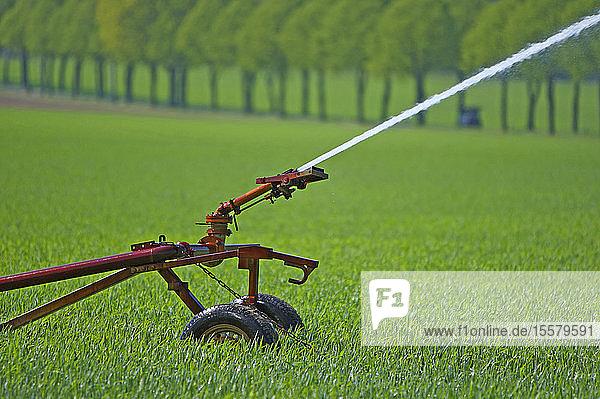 Sprinkleranlage auf dem Feld