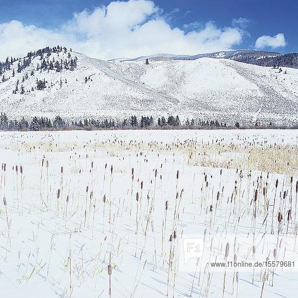 Kanada  Blick auf die Winterlandschaft