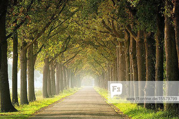 Deutschland  Gasse im Herbst