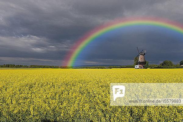 Deutschland  Nordrhein-Westfalen  Lahde  Rapsfeld  Windmühle und Regenbogen