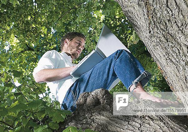 Deutschland  Junger Mann sitzt auf Baum und benutzt Laptop