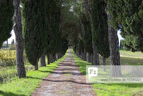 Italien  Toskana  Provinz Siena  Crete Senesi  Blick auf von Bäumen gesäumte Schotterstraße