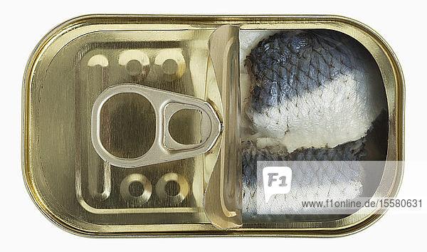 Fisch in der Blechdose auf weißem Hintergrund,  Nahaufnahme