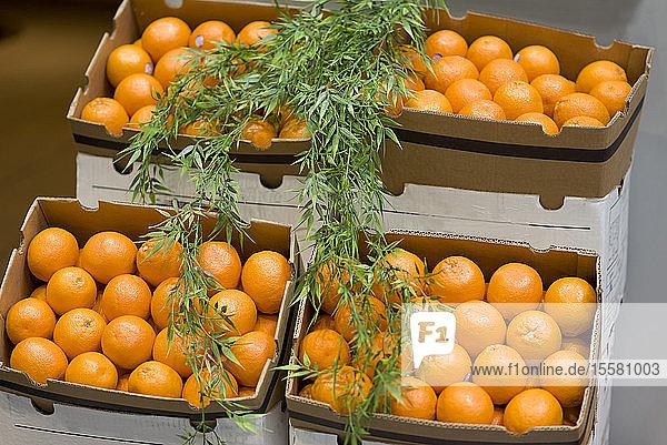 Pappkartons mit Orangen auf dem Wochenmarkt