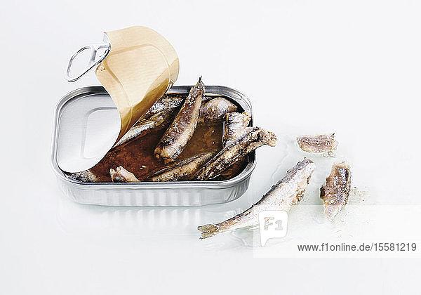 Sardinenbüchse auf weißem Hintergrund  Nahaufnahme