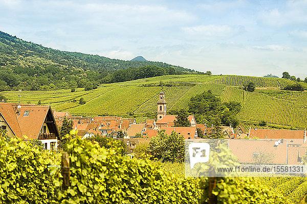 Frankreich  Elsass  Riquewihr  Haut-Rhin  Elsässische Weinstraße  Riquewihr