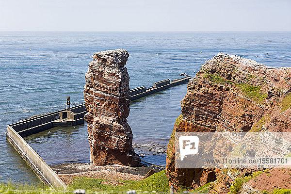 Deutschland  Schleswig-Holstein  Helgoland  nördliche Basstölpel  die auf der Langen Anna brüten