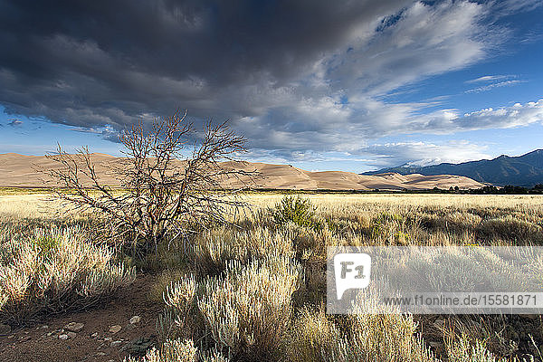 USA  Colorado  Great Sand Dunes National Park and Preserve