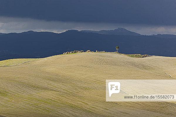 Italien  Toskana  Provinz Siena  Crete Senesi  Landschaft
