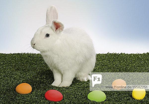 Weißes Kaninchen mit Ostereiern auf Gras
