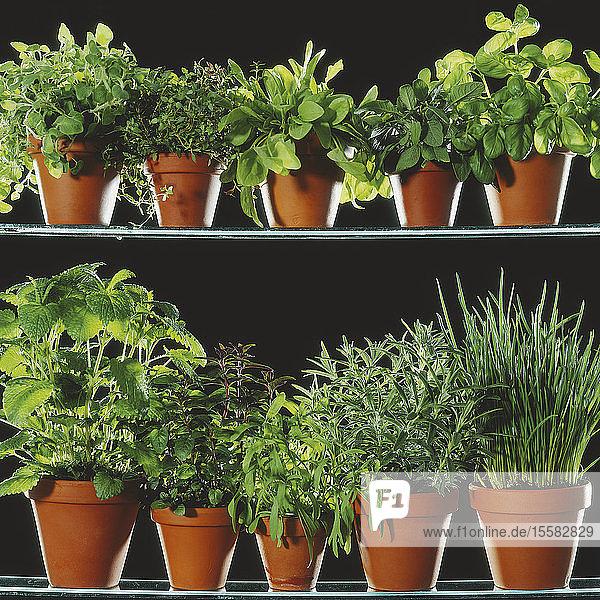 Verschiedene Topfpflanzen auf schwarzem Hintergrund