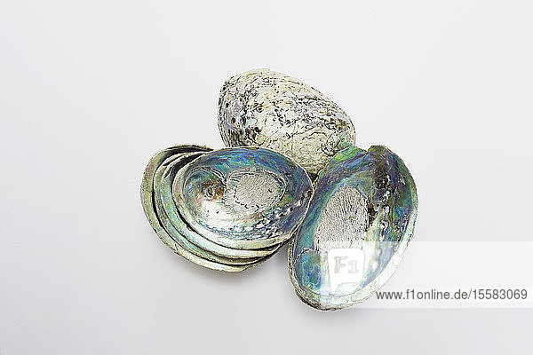 Sea snail shells on white background  close up
